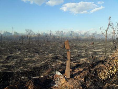 Na última semana, a aldeia Urubu Branco à 60km de Confresa foi invadida por fogo (Crédito: Agência da Notícia)