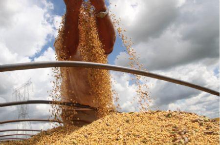 Rondonópolis, Sapezal e Campos Verde também registraram queda nos preços da saca de soja. (Crédito: Reprodução)