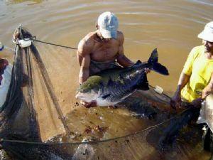 A piscicultura cresce em ritmo acelerado em Confresa (Crédito: Reprodução)