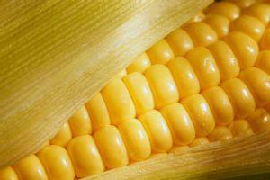 A produção de milho deverá cair de 22,5 milhões de toneladas para 15,2 milhões de toneladas. (Crédito: Reprodução)