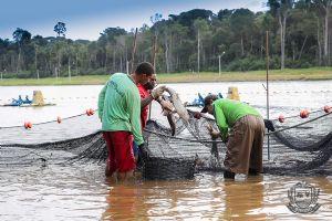 A lucratividade é entusiasmada e supera os lucros com a soja por exemplo, os produtores dizem que para produzir um hectare de lagoa são necessários 10 hectares de soja (Crédito: Agência da Notícia)